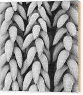 Black And White Hanging Plant Detail. Wood Print
