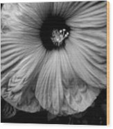 Black And White Hibiscus Wood Print