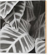 Black And White Leaves Wood Print