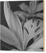Black And White Lilies 2 Wood Print