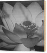 Black And White Lotus In Full Bloom Wood Print
