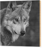 Black And White Mexican Wolf #4 Wood Print