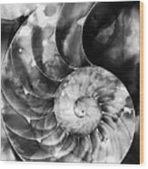 Black And White Nautilus Shell By Sharon Cummings Wood Print