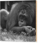 Black And White Orangutang Wood Print