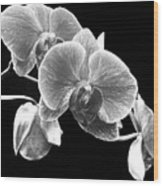 Black And White Orchid Wood Print
