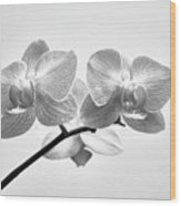 Black And White Orchids Wood Print