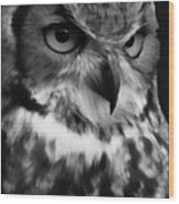 Black And White Owl Painting Wood Print