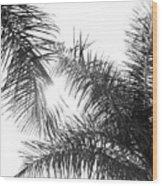 Black And White Palm Trees Wood Print