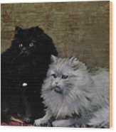 Black And White Persians Wood Print