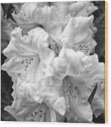 Black And White Rhododendron Wood Print