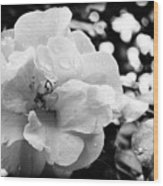Black And White Rose Of Sharon Wood Print by Eva Thomas