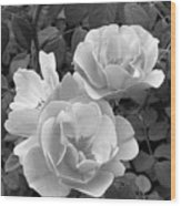 Black And White Roses 1 Wood Print