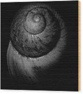 Black And White Shell Art Wood Print