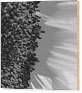 Black And White Sunflower Wood Print
