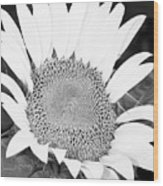 Black And White Sunflower Face Wood Print