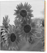 Black And White Sunflowers Wood Print