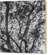 Black And White Tree 2 Wood Print
