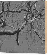 Black And White Tree Branch Wood Print
