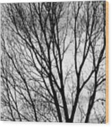 Black And White Tree Branches Silhouette Wood Print