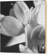 Black And White Tulips #4 Wood Print