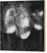 Black And White Tulips Wood Print