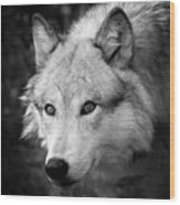 Black And White Wolf Wood Print