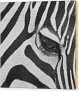 Black And White Zebra Close Up Wood Print