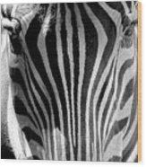 Black And White Zebra  Wood Print