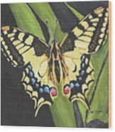 Black And Yellow Butterfly Wood Print