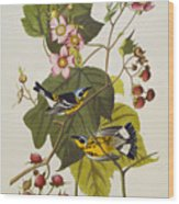 Black And Yellow Warbler Wood Print