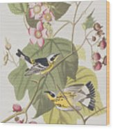 Black And Yellow Warblers Wood Print