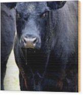 Black Angus Bull Wood Print by Tam Graff