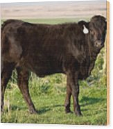Black Angus Calf In Green Grassy Pasture Wood Print
