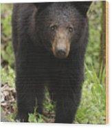 Black Bear At Cades Cove Wood Print