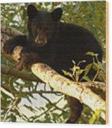 Black Bear Cub Resting On A Tree Branch Wood Print