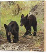 Black Bear Cubs Wood Print