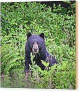 Black Bear Eating His Veggies Wood Print