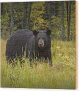 Black Bear In The Grass Wood Print