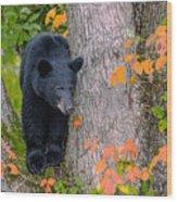 Black Bear In Tree Wood Print