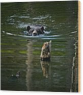 Black Bear Pictures 104 Wood Print