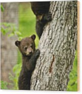 Black Bear Pictures 84 Wood Print