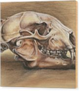 Black Bear Skull Wood Print by Darlene Watters