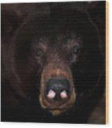 Black Bear Sniff Wood Print