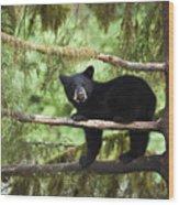 Black Bear Ursus Americanus Cub In Tree Wood Print