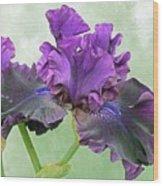 Black Bearded Iris Wood Print