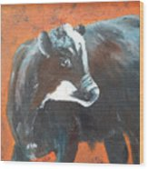 Black Beauty Wood Print by Jean Ann Curry Hess