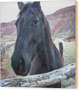 Black Beauty Wood Print