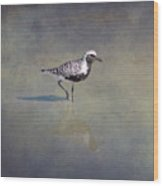 Black-bellied Plover By Darrell Hutto Wood Print