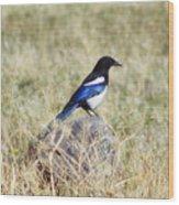 Black-billed Magpie Wood Print
