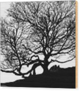 Black Birch Silhouette 2009 07 Wood Print